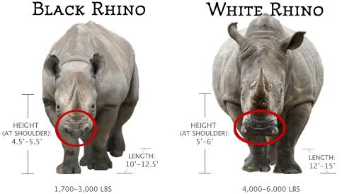 Rhino-Comparison