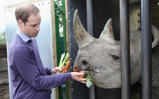rhino prince william