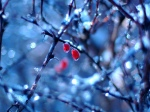 contentment_winter