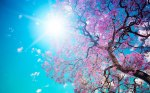 euphoria_spring