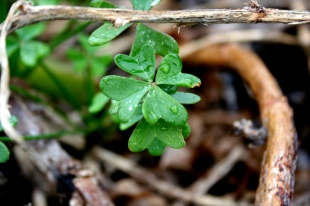 My lucky clover in Hartenbos.